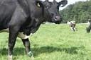 dairy_farmer_unrest