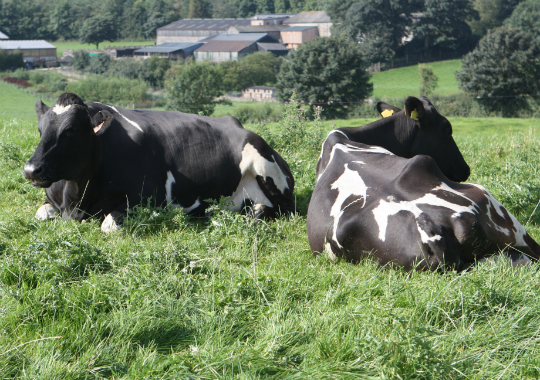 farmcowsinfield