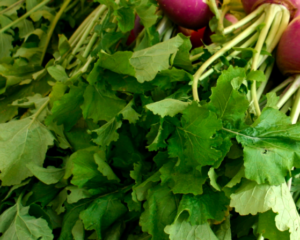 In season: turnip tops
