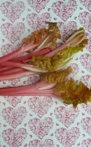 In season: Rhubarb main crop