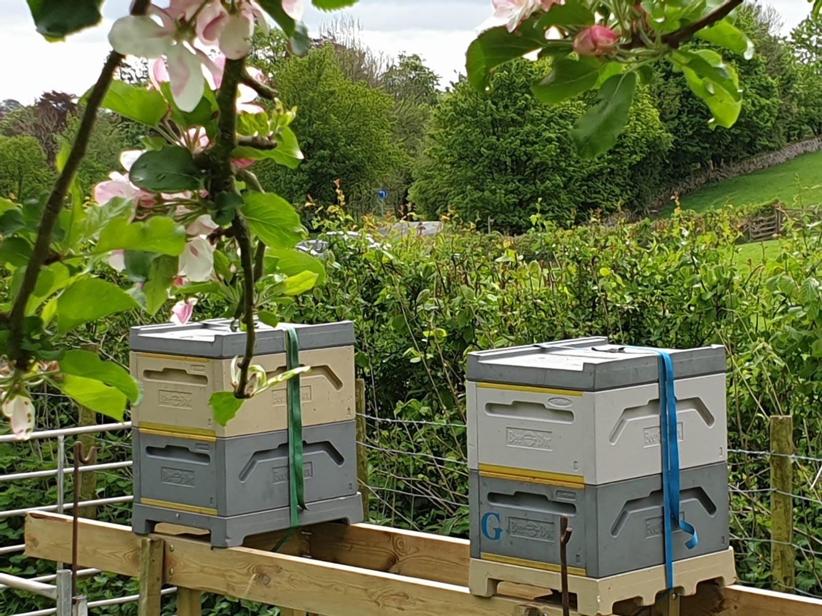 bee hives at low sizergh farm