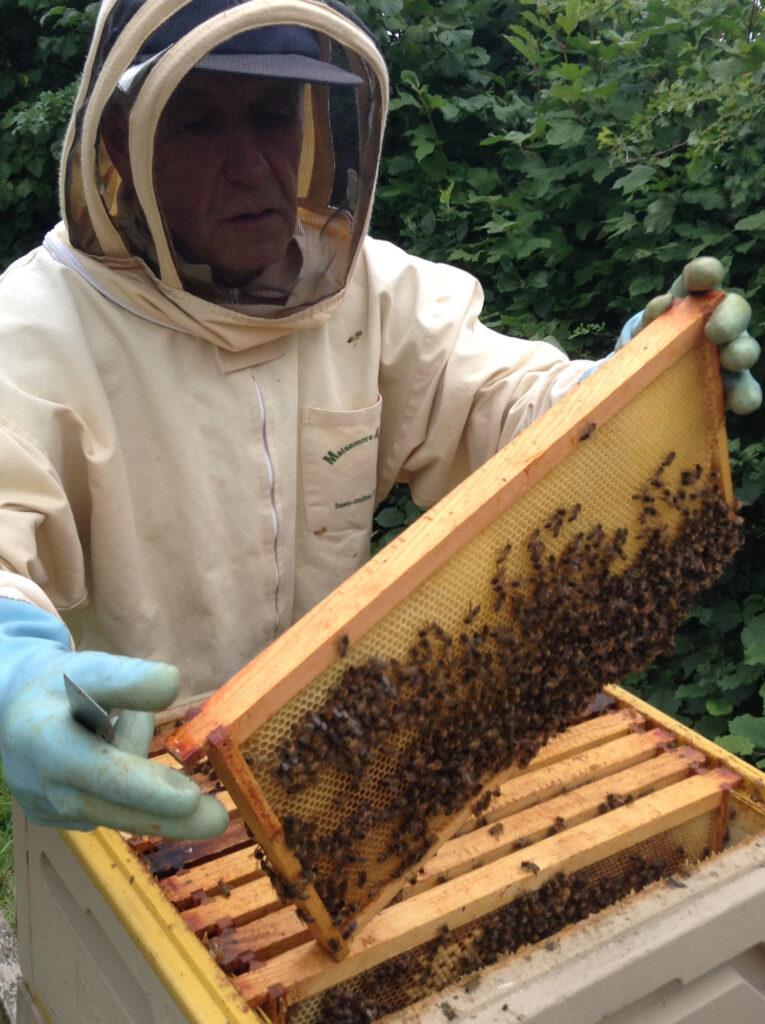 bee honey farm