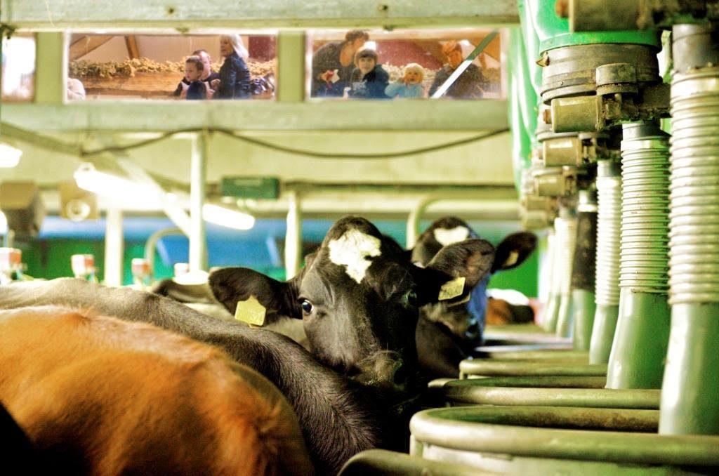Low Sizergh Farm raw milk