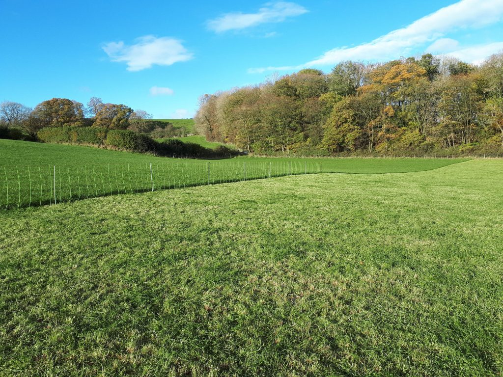 rotational grazing for sheep grass recovery