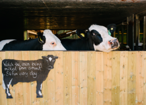 Farm diversification: the Low Sizergh story